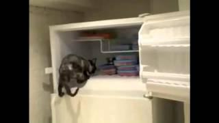 Крутые кошки-открывашки. Им все двери открыты !