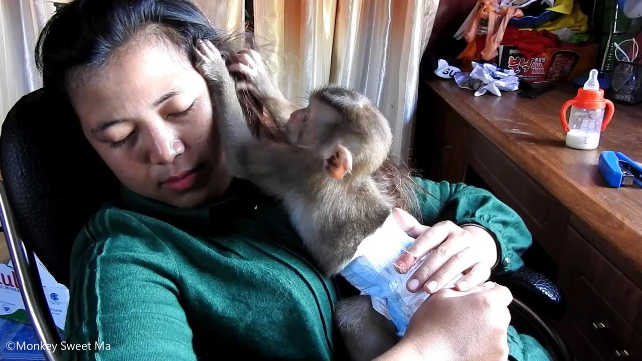 Baby Monkey Sweet-To Smart Find Lice's Mom, Sweet TO ...