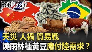 天災、人禍、貿易戰 巴西燒亞馬遜雨林種黃豆應付大陸需求!? 【關鍵時刻】20190904-5 黃世聰 黃創夏