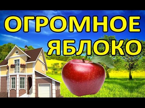 Огромное яблоко | Большое яблоко