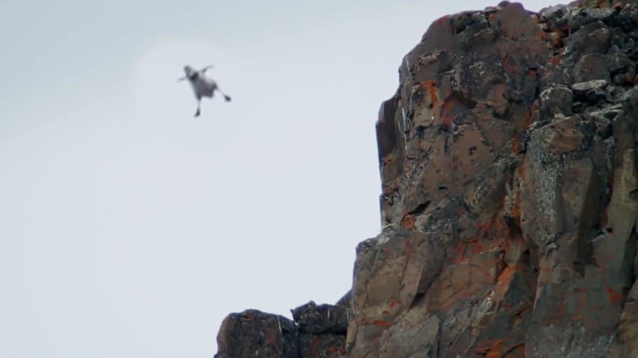 Wild Leaps Of Faith | Top 5 | BBC Earth