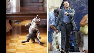 Коты и кошки, которые выглядят как знаменитости