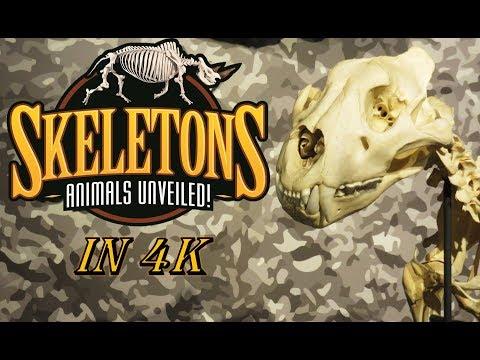 4K Real SKELETONS @ Museum of Osteology Orlando - America's largest skeleton museum