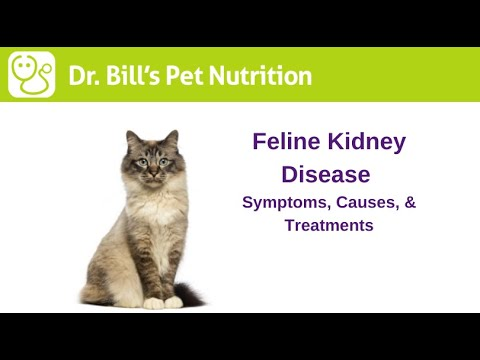 Feline Kidney Disease | Symptoms, Causes, & Treatments | Dr. Bill's Pet Nutrition