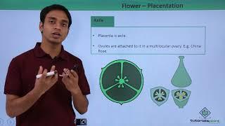 Flower - Placentation