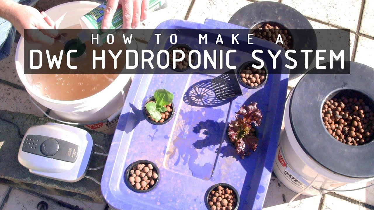 How To Make a Deep Water Culture (DWC) Hydroponics System: Cannabasics #105
