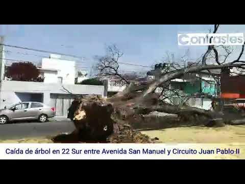Circuito Juan Pablo Ii : Caída de árbol en la 22 sur entre avenida san manuel y circuito juan
