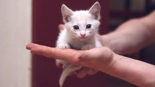 Крошечное белое счастье с голубыми глазками ищет дом!