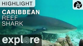 Caribbean Reef Shark - Cayman Reef Live Cam Highlight thumbnail