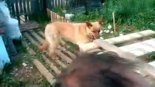 кормушка сенник для коз