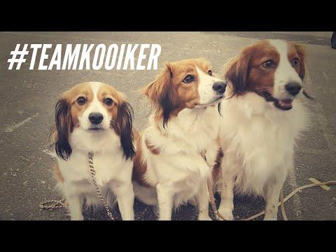 DOG SHOW #1 - BORDEAUX 2018 with Kooikerhondjes