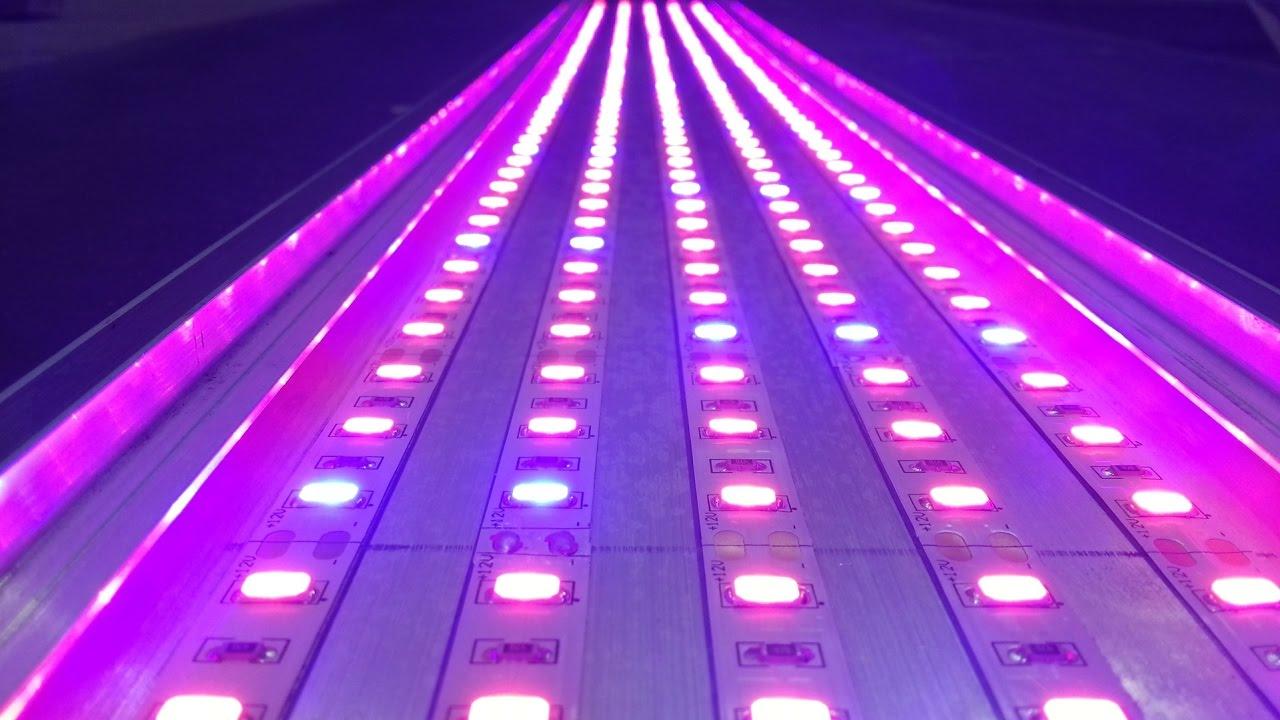 ahoot.ru | Живительный свет 2/3 Фитолампа досвета растений Изготовление/Special fito LEDstrips p2