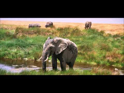 Serengetti Bliss