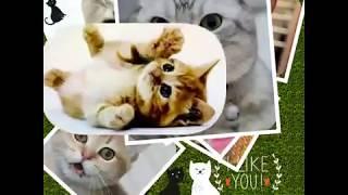 Забавные котейки фото-коллаж кошки