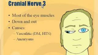 Neuro - Cranial Nerve 3 Palsy