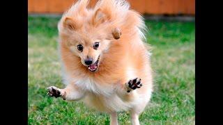 Приколы с собаками! Смешные, Забавные и Умные Собаки! подборка #1