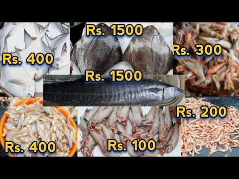 1871 Oldest & Biggest Sassoon Dock Fish Market Mumbai🐟Sassoon Dock Fish Market | Sassoon Dock Colaba