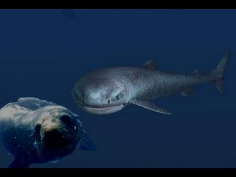 the mighty and mysterious greenland shark  the mighty and mysterious greenland shark
