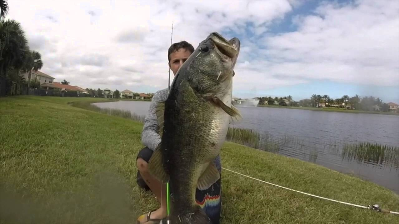 Monster bass fishing 12 pounder and more youtube for Bass pro shops monster fish
