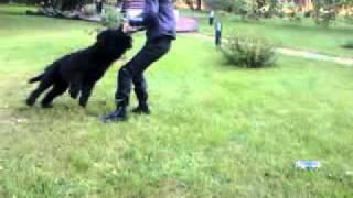 летающая собака!!!!