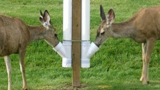 How to build an inexpensive homemade deer feeder...