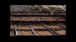 Nhân sâm Hàn Quốc - Tập 2: Nguồn dinh dưỡng vàng