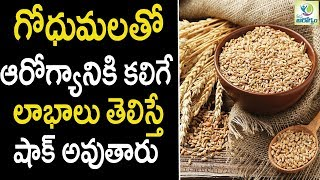 wheat Health Benefits - Health tips in Telugu || mana Arogyam