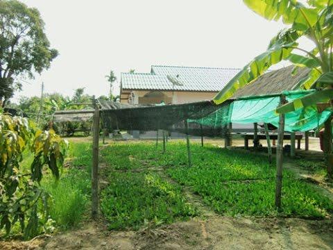รายได้ใกล้ๆ บ้านจากการปลูกผัก 1 ปลูกผักชีฝรั่ง