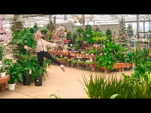 House Plant Shop Tour Haul Go House Plant Shopping With Me Al S Garden Center In Winter Youtube