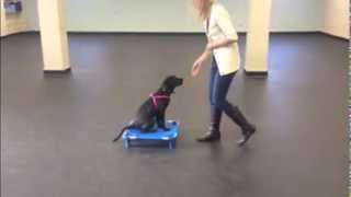 Puppy Training, Recall And Place Command | K9 Connection Dog Training