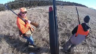 Pheasant Hunt March 2019