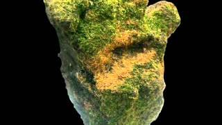 Hỏi đá xanh rêu bao nhiêu tuổi đời?