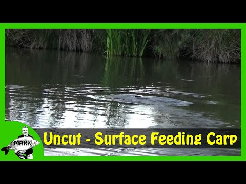 Surface Fishing For Carp - Uncut