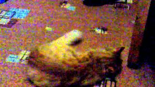 Кошка Мая и ручка в валерьянке.