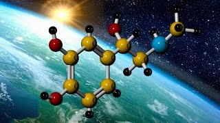 Epinephrine or Adrenaline: 3D Molecule
