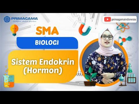 Video Primagama | SMA | Biologi | Sistem Endokrin (Hormon)
