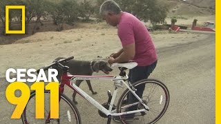 Deleted Scene: Chicken Coop Conditioning | Cesar 911