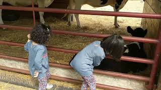 Kids visited Farm- Cow Video, Cow Moo Moo, Nursery Rhyme- Aliza Toys Review