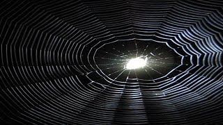 Spider Web Under Light is Amazing
