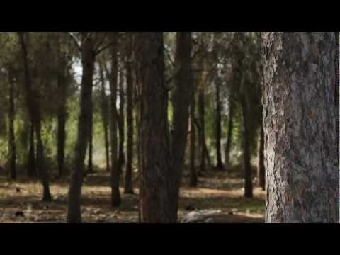 Bosques Em Israel - Forests In Israel - Holy Land