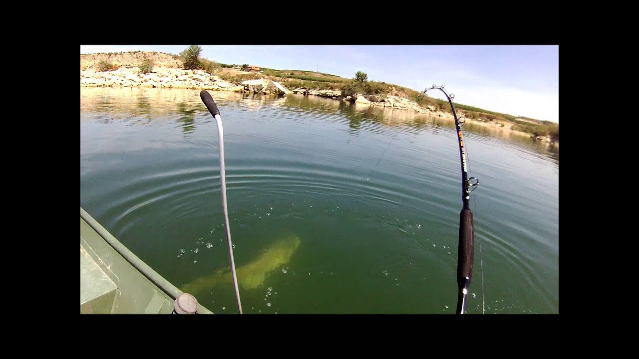 Buena vista fishing youtube for Bakersfield fishing report
