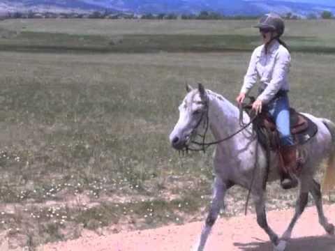 Colorado Horse Rescue - Leo: Partnership Training at MRHT