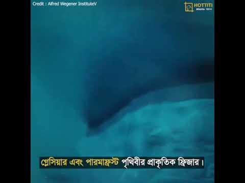 Download Nahid Sharif