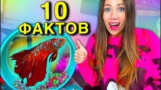 Теперь Немо Красный 10 Фактов о моей Рыбке Мой Аквариум | Elli Di Pets