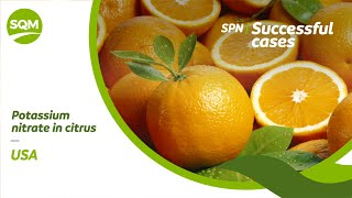 SPN Successful cases, Orange – USA