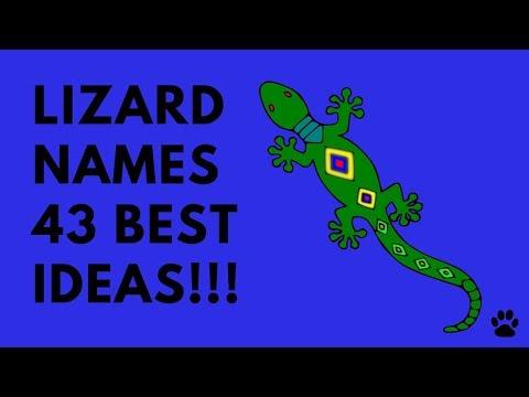 Lizard Names - 43 BEST Ideas!!! | Names