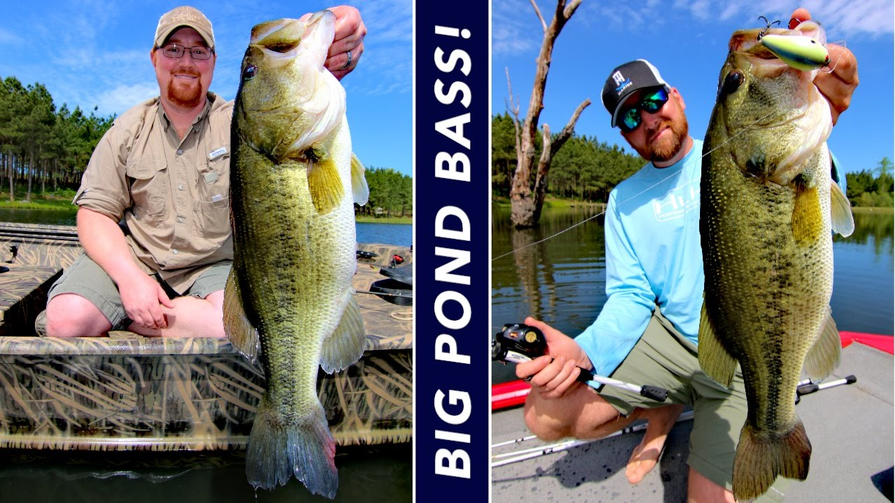how big does a pond need to be for bass