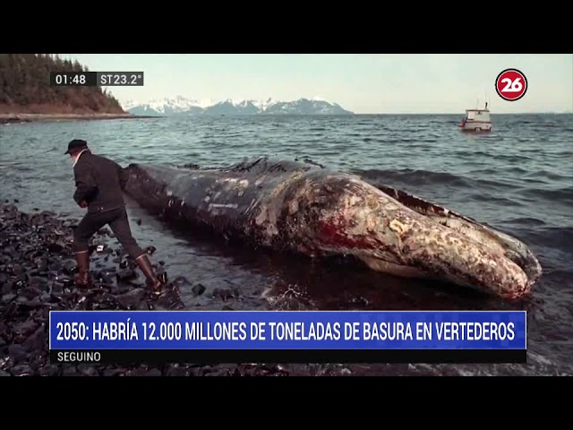 Informe especial: Animales en peligro