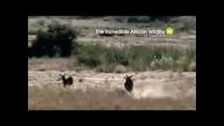 Удивительная природа Африки (трейлер)