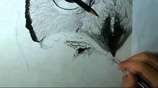 Speed Drawing Coruja - Jéfferson Raibolt